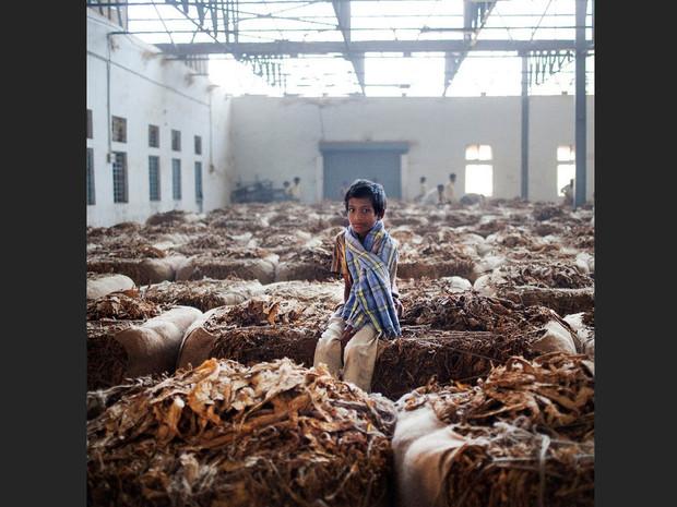 Inde, les enfants travaillent dans les usines de fabrication de tabac